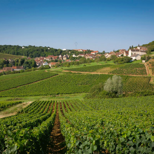 Vignes Buxy