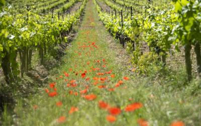 La Haute-Provence, retour aux sources