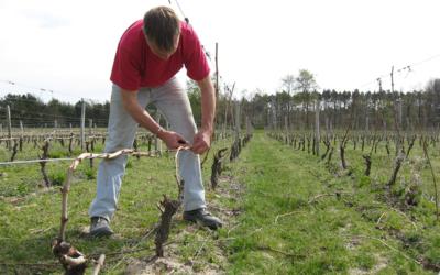 Opération vins et châteaux en Loire